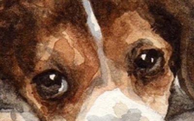 La race du Beagle